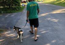 Steven walking Sasha