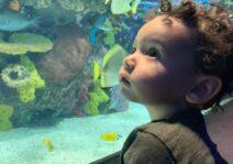 Asher taking it all in at Ripley's aquarium