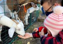 Visiting a farm to experience the animals up close!