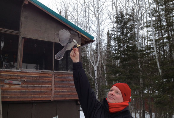 Marius at Jane's Dad's cabin in Manitoba feeding a whisky Jack (2013).