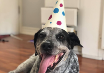 Our nine-year old lab/cattle dog mix, Ed (a rescue dog). We think he got the name because