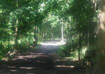 Trails near by